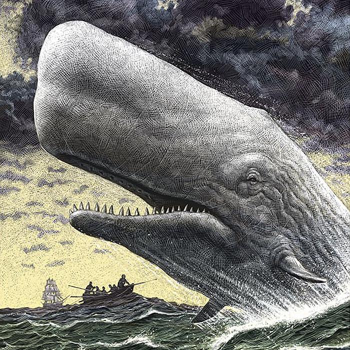 Da li ste videli Belog kita